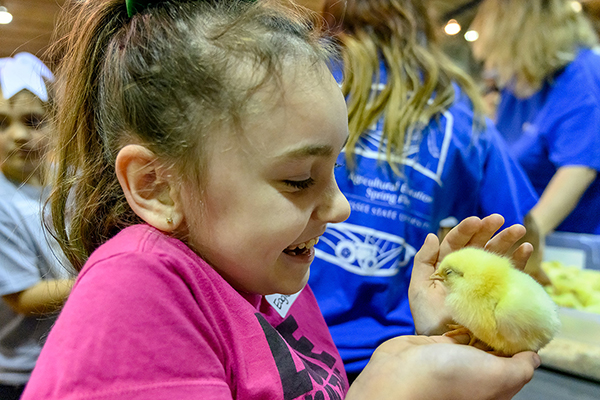 Baby chicks steal the show at MTSU Ag Education Spring Fling